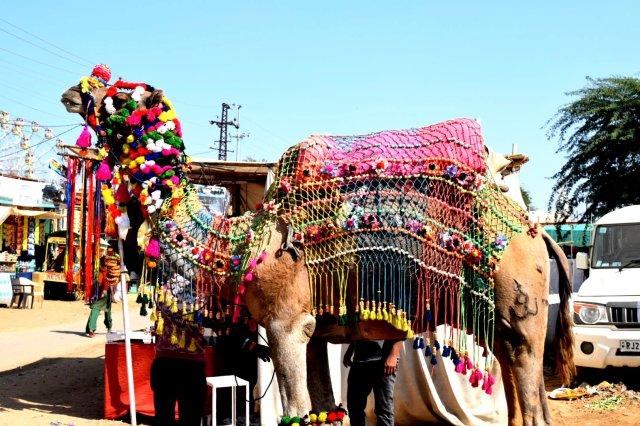 Decorated camel in Pushkar fair