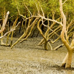 Sundarban forest trip cost itinerary