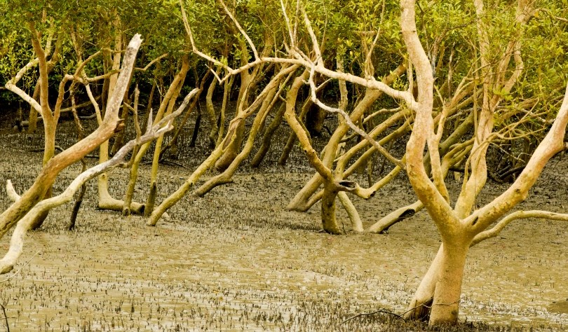 Kolkata Sundarban trip cost itinerary