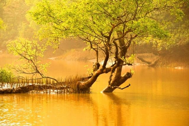 Bhitarkanika Mangrove forest
