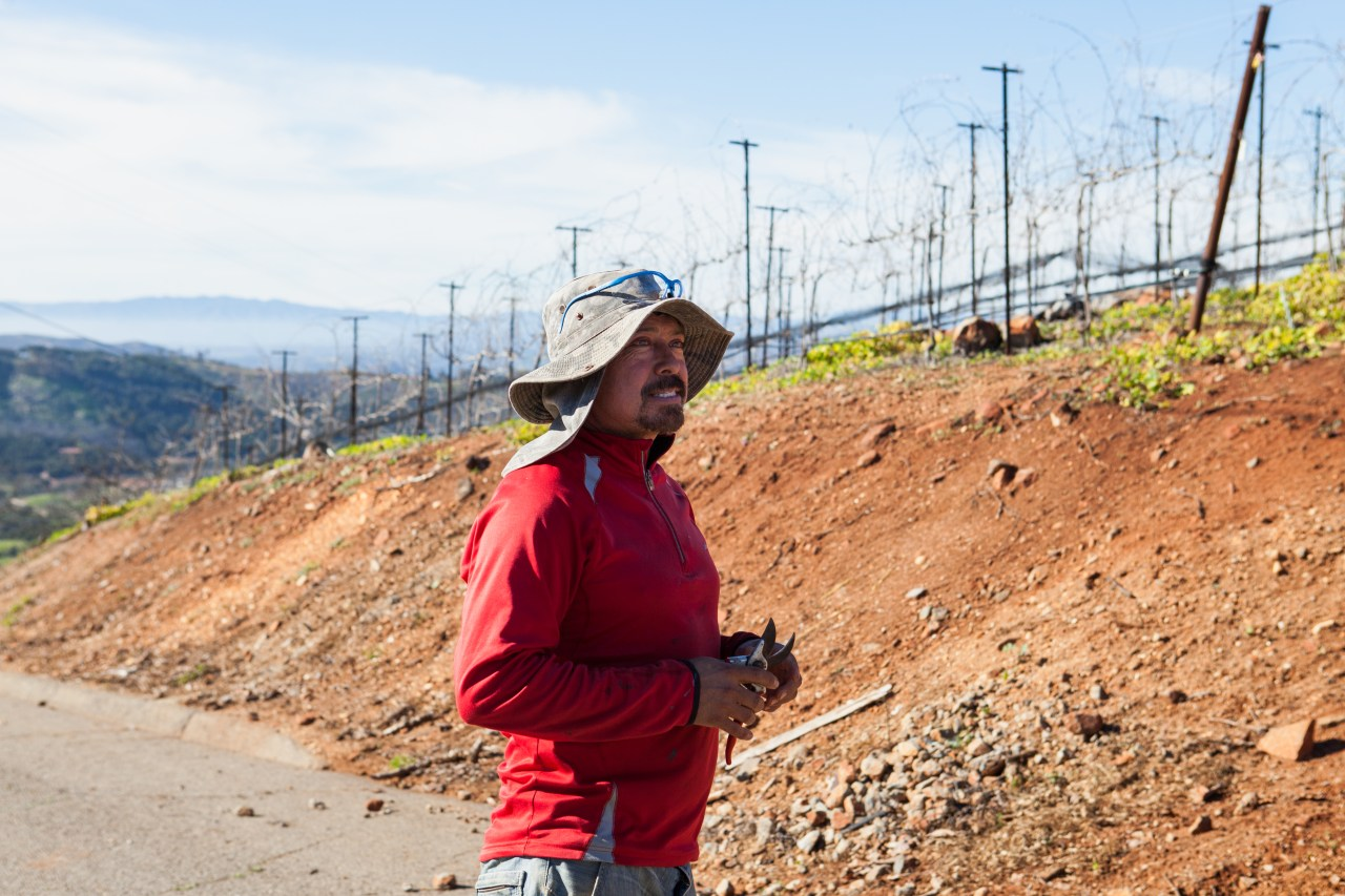 Jose Aranda, a farmworker at Stehly Grove Management.