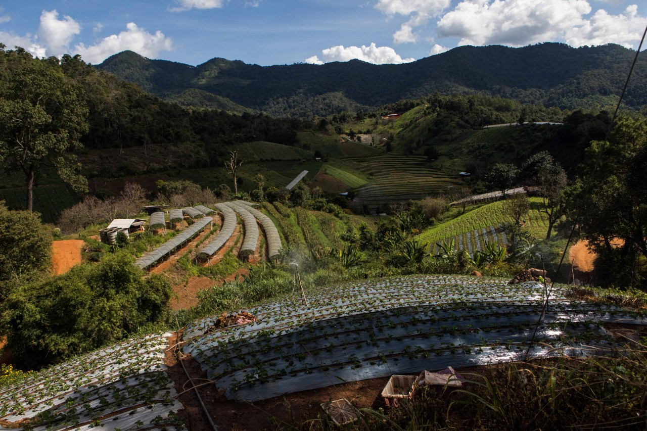Rolling farmlands and orchards along the Mae Wang Loop.