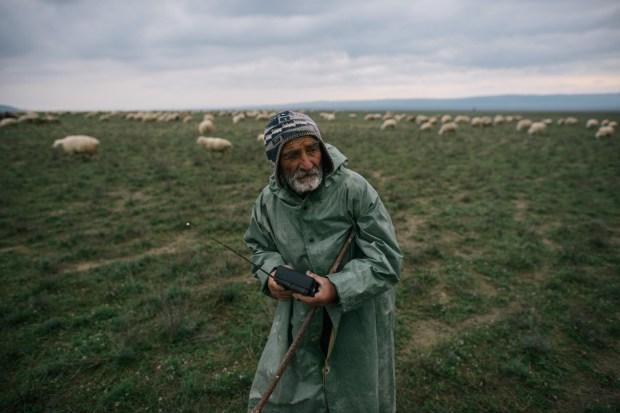The tush shepherd Pore Foretilidize, 80