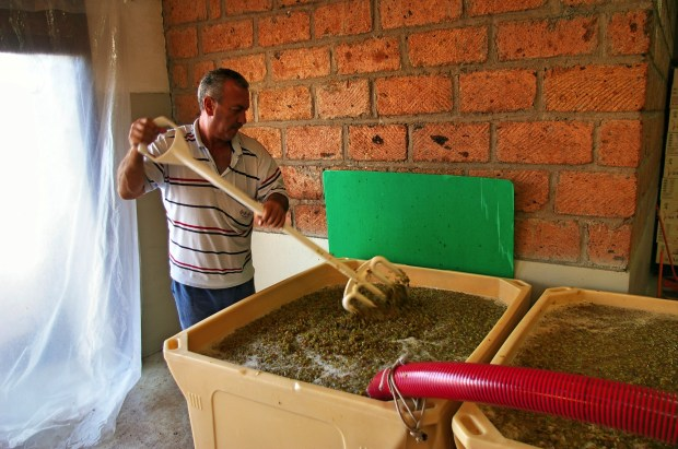 A worker at Van Ardi winery stirs grapes and juice collected immediately after crushing. Photo by: Christian Garbis