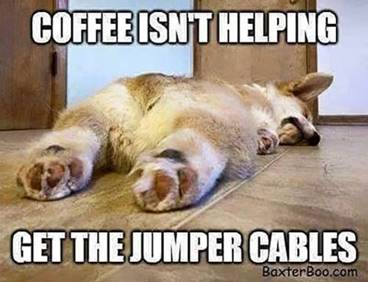 40 Funny Good Morning Quotes With Images Explorepic