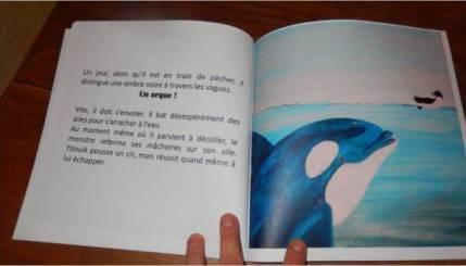 orque pingouin manchot voyage océan danger