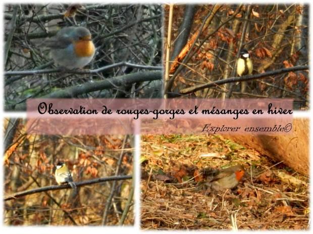sortie naturaliste observation oiseaux enfants activité nature