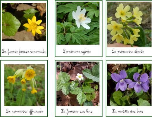 cartes de nomenclature montessori fleurs bois printemps