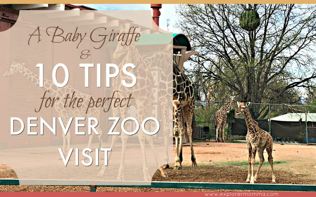 A Baby Giraffe and 10 Tips for the Perfect Denver Zoo Visit