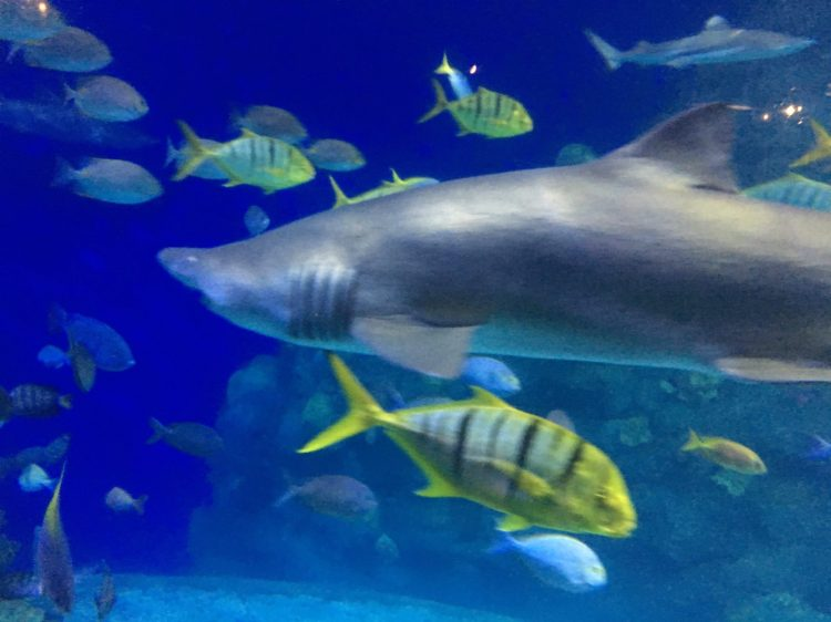 Aquarium shark tank, Denver