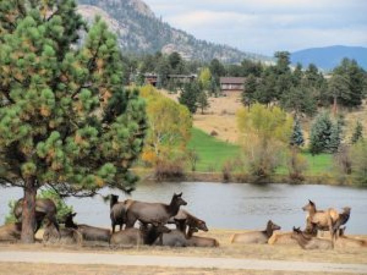 Estes Park hikes for kids, elk #estesparkcolorado #kidshike