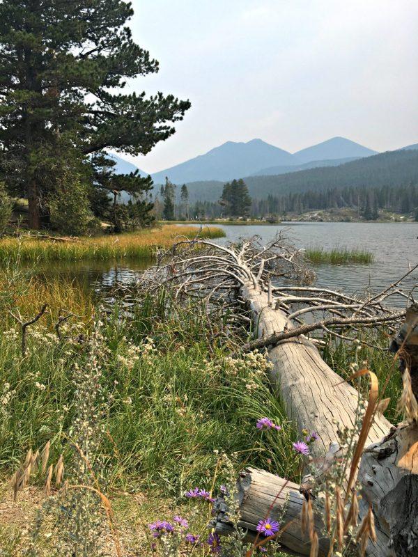 Sprague Lake view and tree