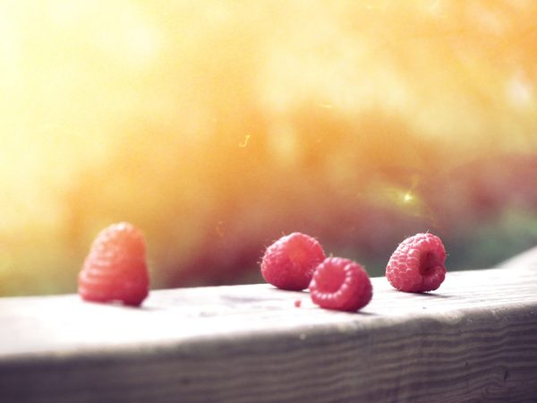 Raspberries on a fence in the sun
