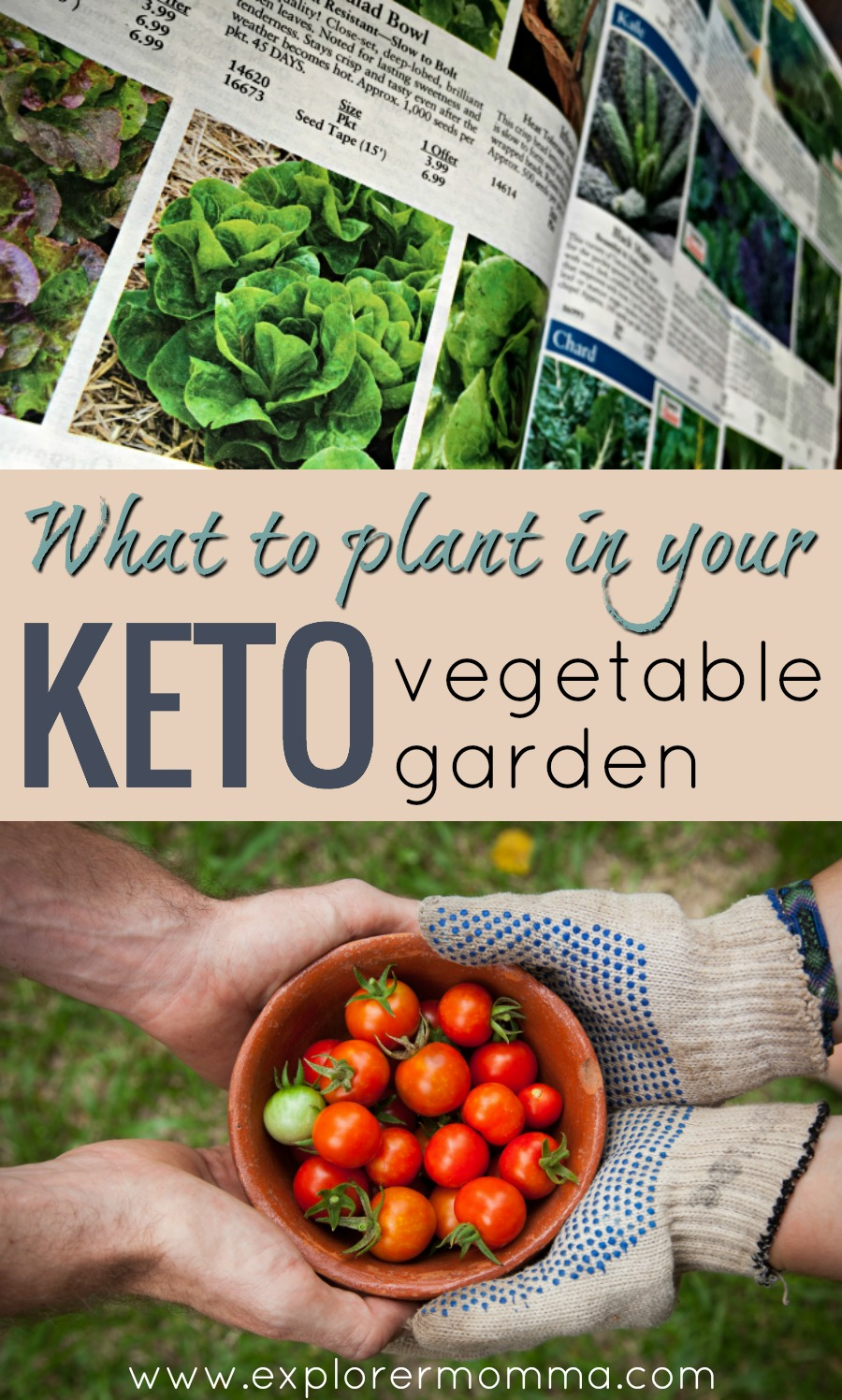 Amazing What To Plant In Your Keto Vegetable Garden