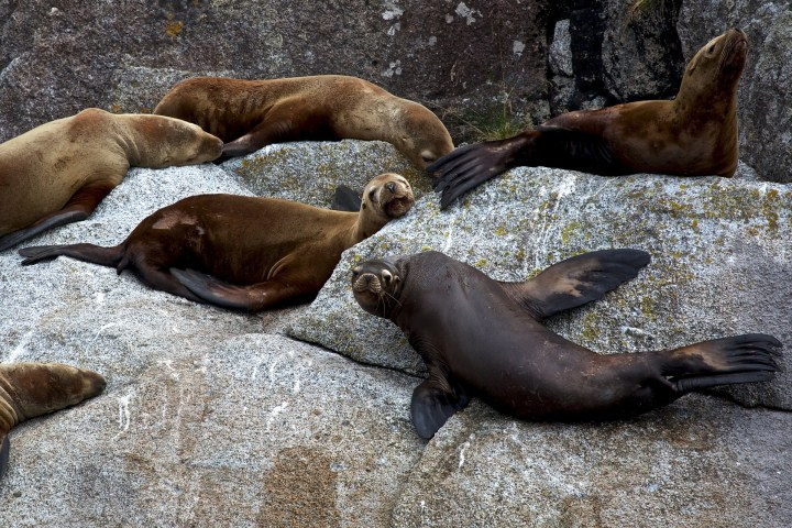 Kenai Fjords National Park, sea lions