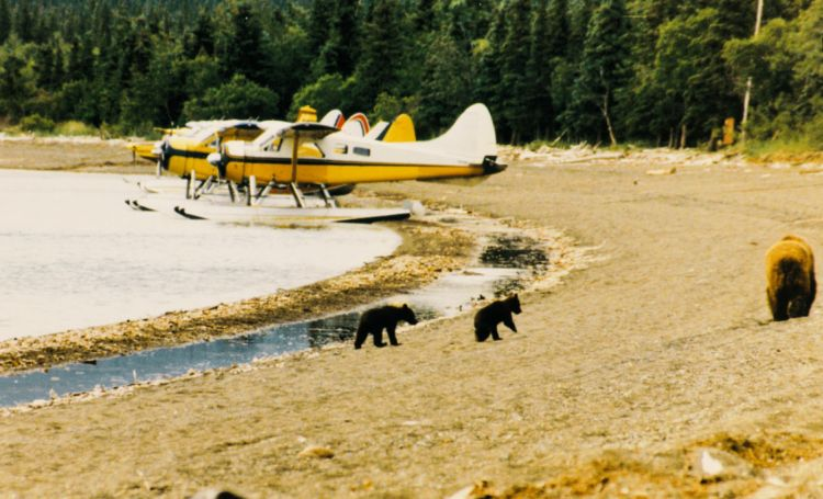 Katmai National Park, Northern States National Parks, Alaska #katmainationalpark #familytravel
