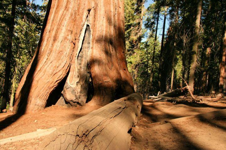 Redwood National Park, giant Redwoods #redwoodnationalpark #gianttrees