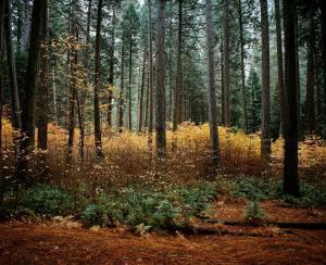 Fall layers. #mamiya7ii #portra400
