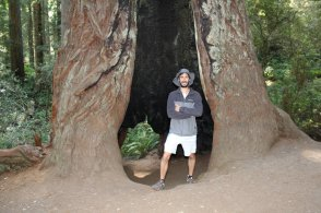 Maybe I can spend the night in here! - Redwood National Park - Lady Bird Johnson Grove