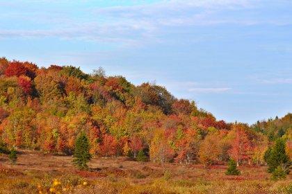 Fall colors in Dolly Sods near Blackbird Knob