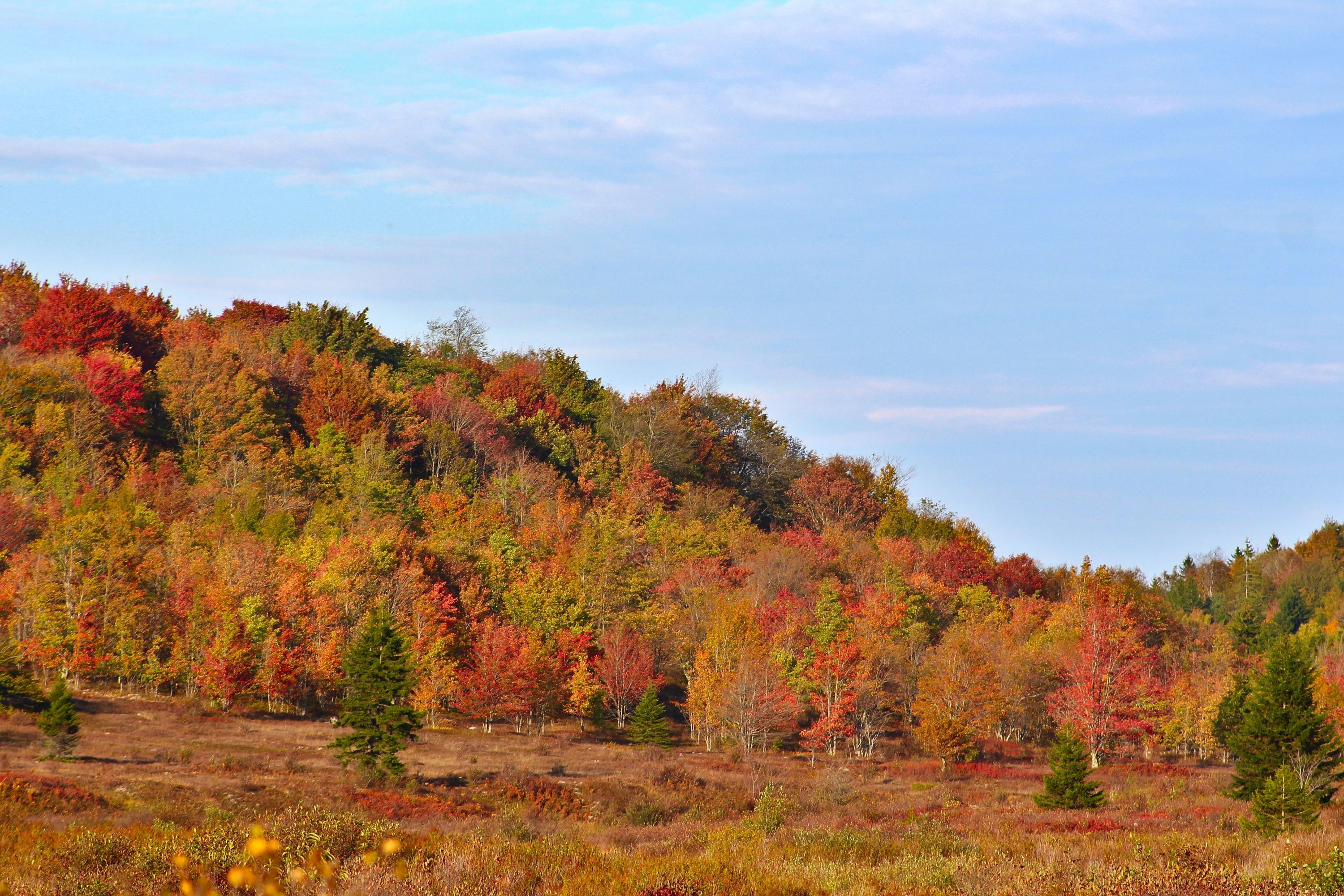 Fall colors in Dolly Sods near Blackbird Knob
