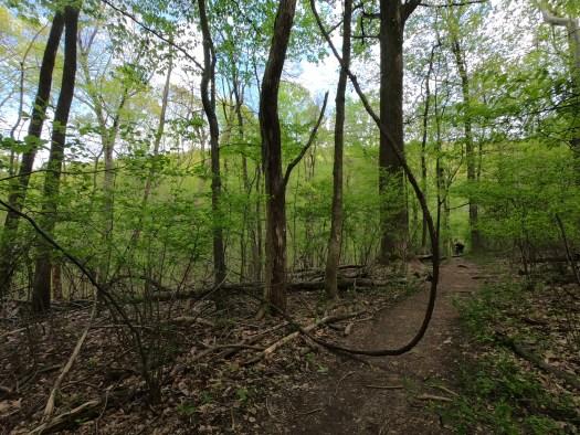 Big vines along the AT