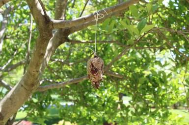 Bird feeder - 5-10-20