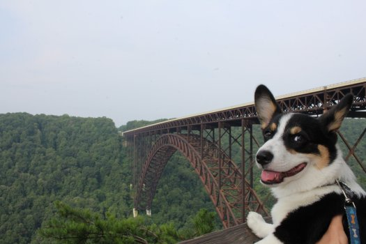Scooter at the New River Gorge - 07-25-21