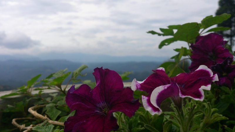 Beautiful flowers at the edge of cliff