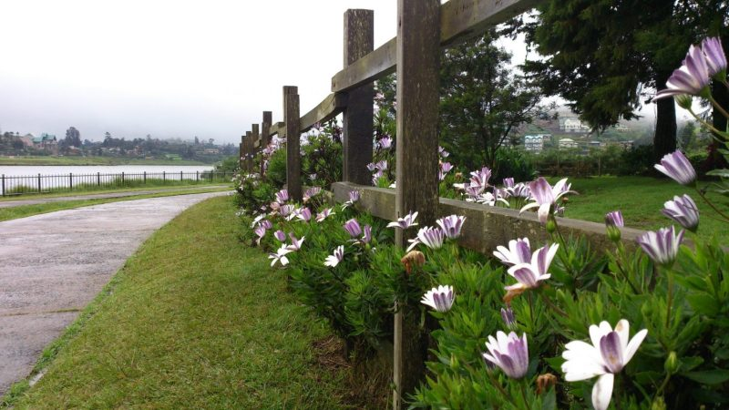 Flower fences at Gregory Lake Park - One of Inevitable Places to Visit in Sri Lanka