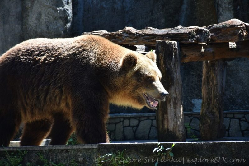 African Bear at Dehiwala Zoo