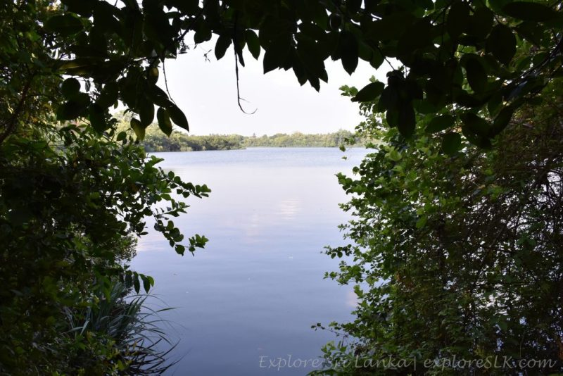 Sight of Diyawanna Oya from the Park