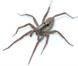 Listen - arachnids