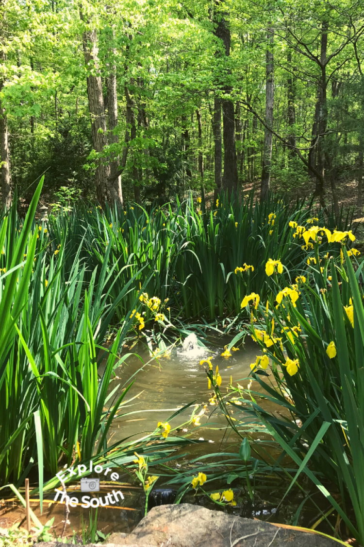 Flowers the woods and a pond at Dauset Trails in Jackson, Ga.