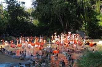 Flamingo Lake in Jurong Bird Park Singapore