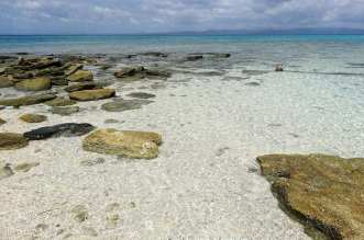 Malapascua Island's rich corals of the Visayan Sea in the Philippines