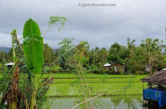 Rice farms in the Silago evergreen lowland in Southern Leyte Philippines