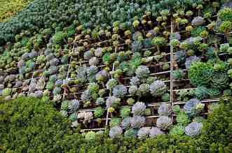 Living Green Plant Eco Walls and Vertical Gardens ~ Going Beautifully Green! - A close up of a flower garden - Green wall