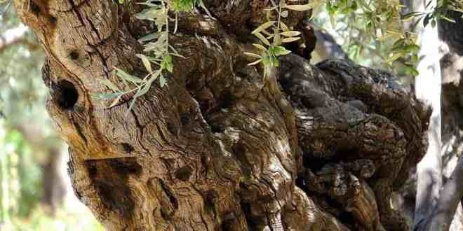 Garden Of Gethsemane Treasures - A bird sitting on top of a tree - Gethsemane