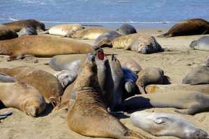 Photo Tour Of Central California Wine Country And Its Beaches - A seal on a beach near a body of water - Sea lion