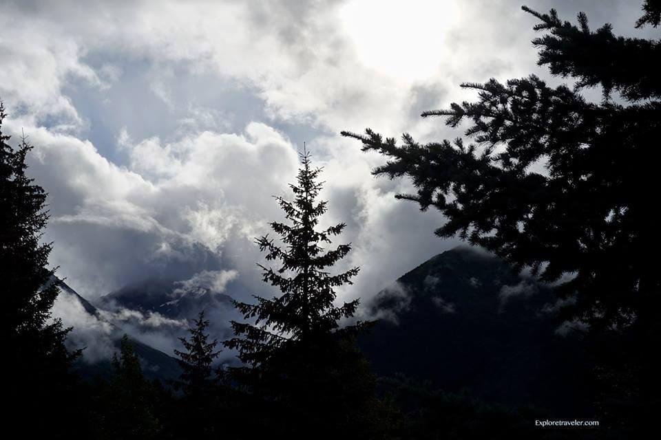 Whittier Alaska Forest