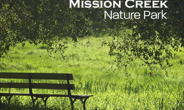 Discovering Mission Creek Nature Park in Olympia