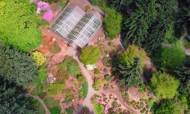 Rhododendron Species Botanical Garden – A Peaceful Escape