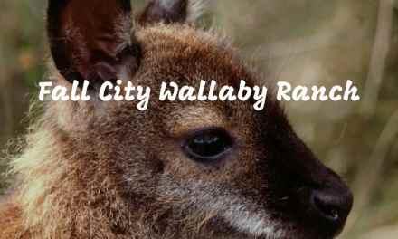 The Fall City Wallaby Ranch