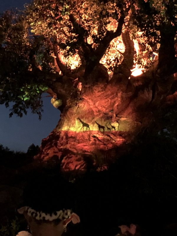 The Tree Awakens in Disney's Animal Kingdom