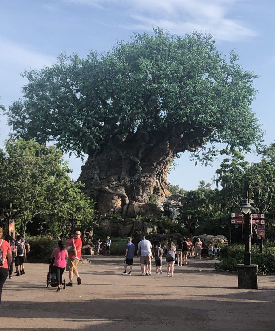 The Tree of Life in Animal Kingdom on a day with Extra Magic Hours