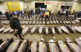 Tuna in Tsukiji Market