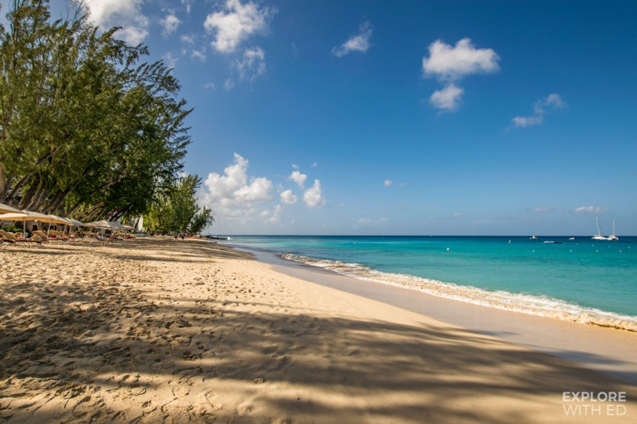Tropical palm tree lined beach in Barbados