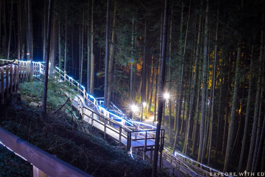 Bluestone woodland at night