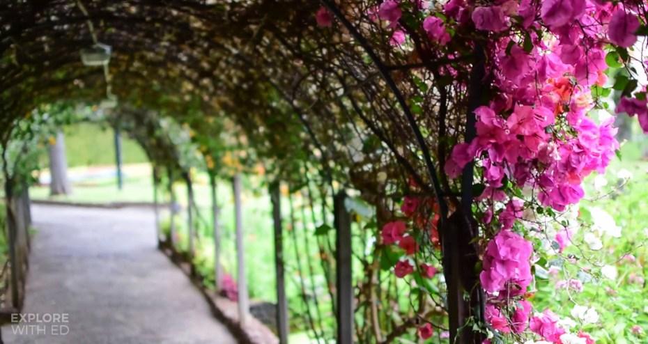 Flower tunnel, Landscaped gardens